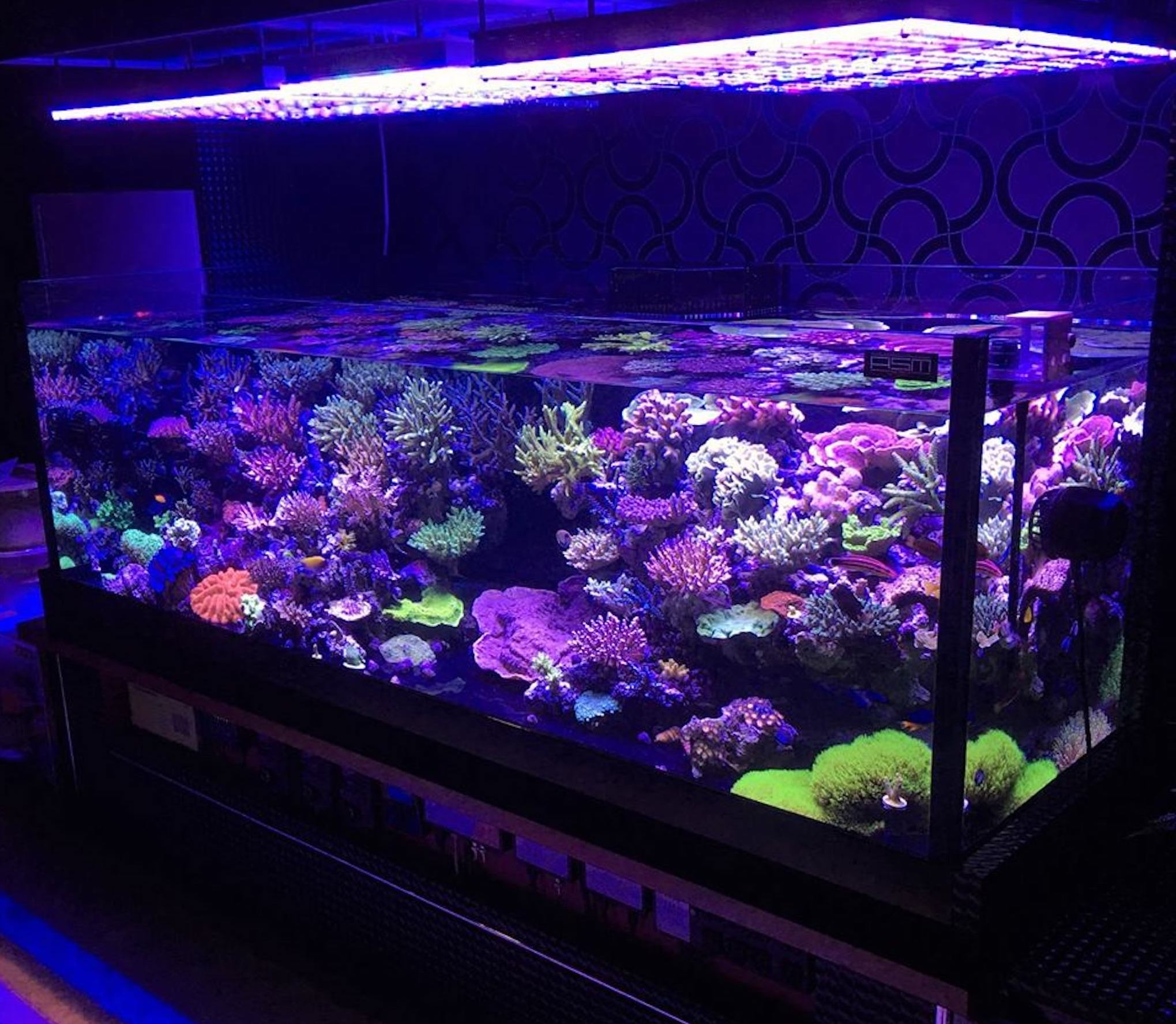 masahiro reef aquarium japan