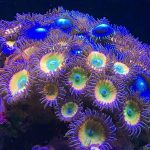 霓虹灯的珊瑚礁关闭