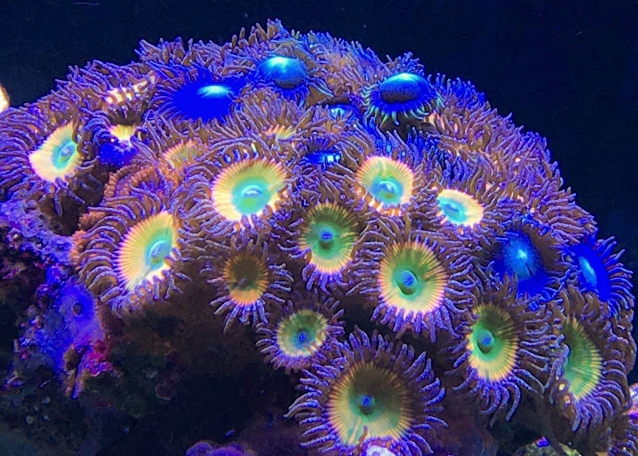 Orphek Japan Reef Tour Meeting Pacific Japan Co Aquarium
