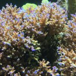 orange corail récif