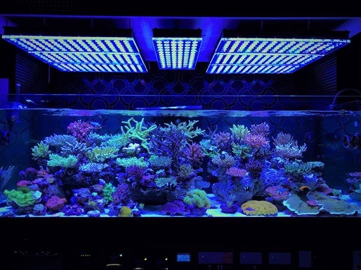 reef tank-japan-marine-havvands
