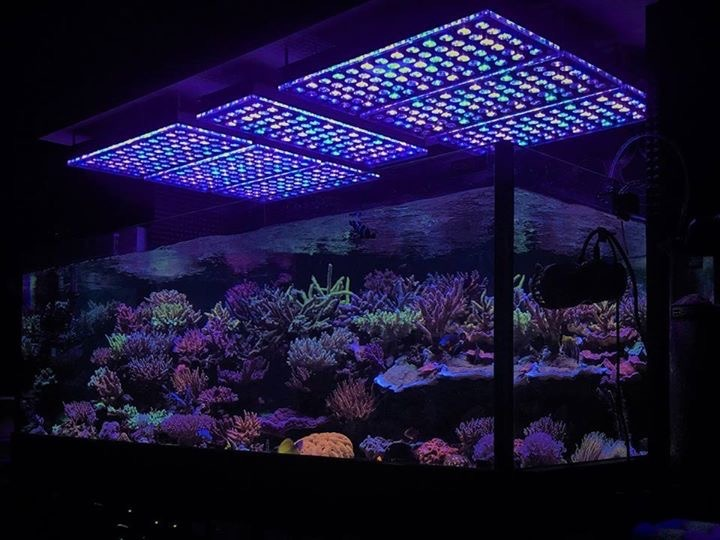 Orphek_aquarium_LED_Lighting
