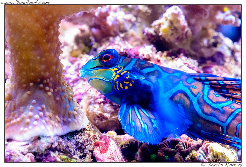 Fisch-Blau-Aquarienbeleuchtung