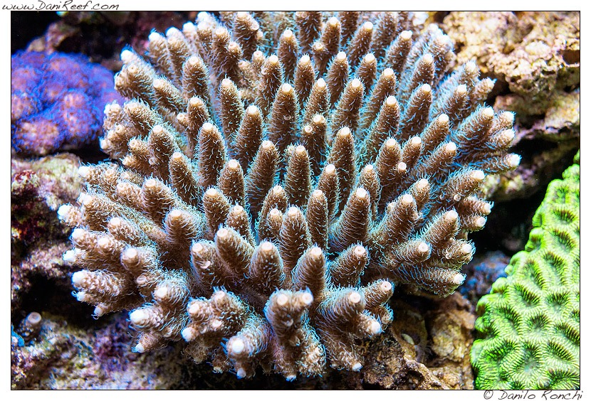 corals-reef-saltedwater-led-lighting