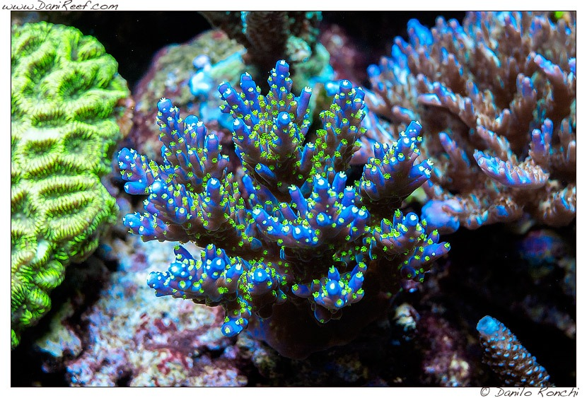 sps-LED-Aquariumbeleuchtung