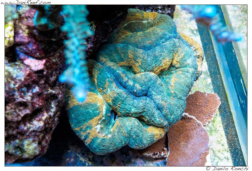 Korallen-Aquarium-LED-Beleuchtung