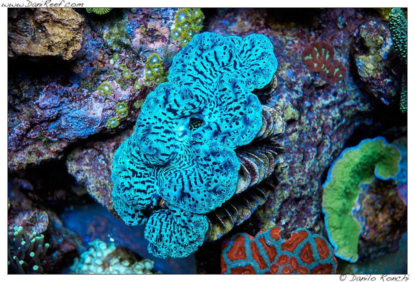 Coral Gallery Under Orphek Reef Aquarium LED