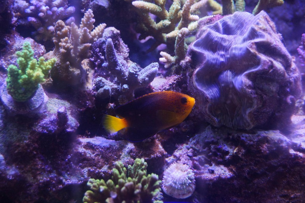 close-up-reef-aquarium