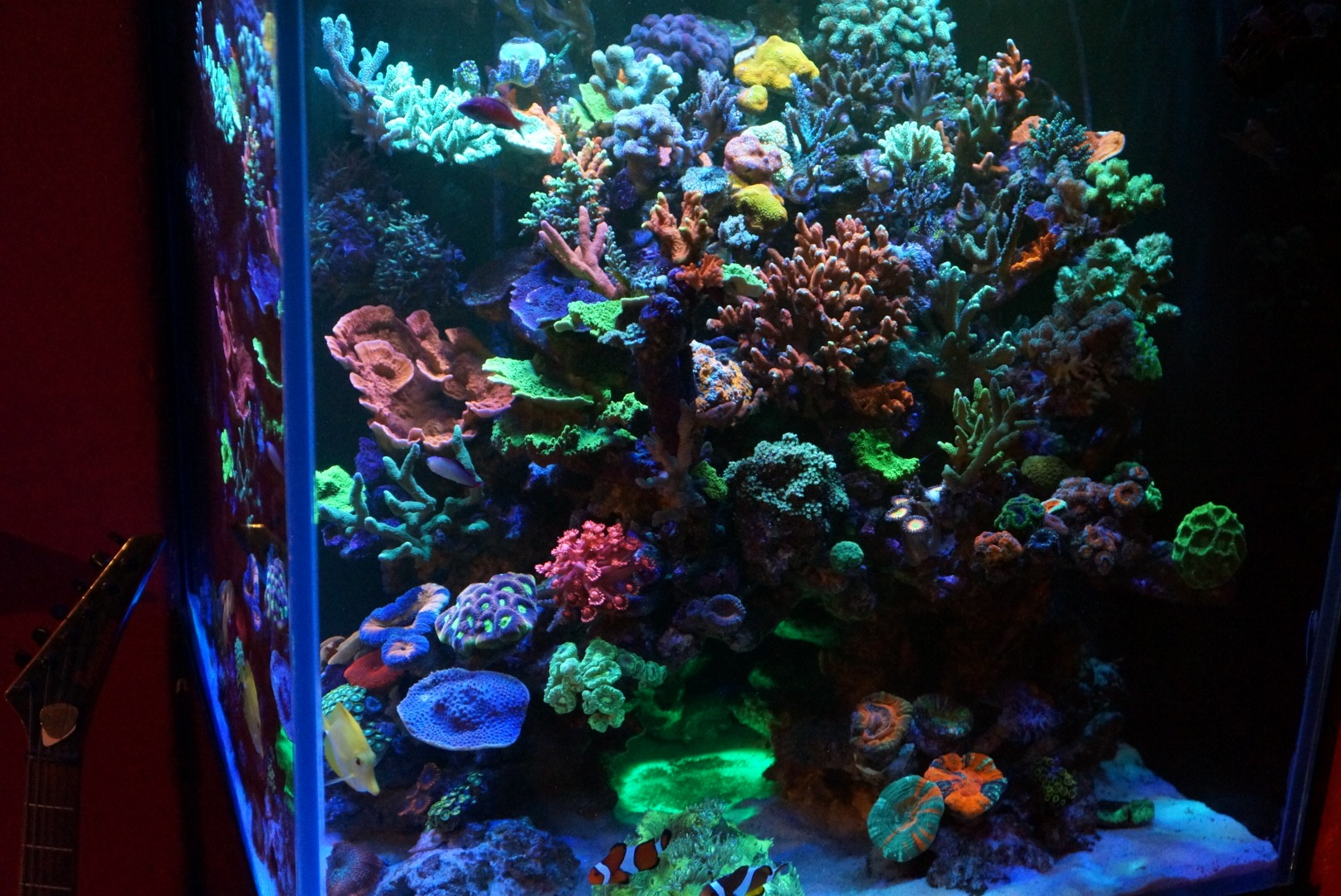 Coral Reef Tank cahaya LED Display
