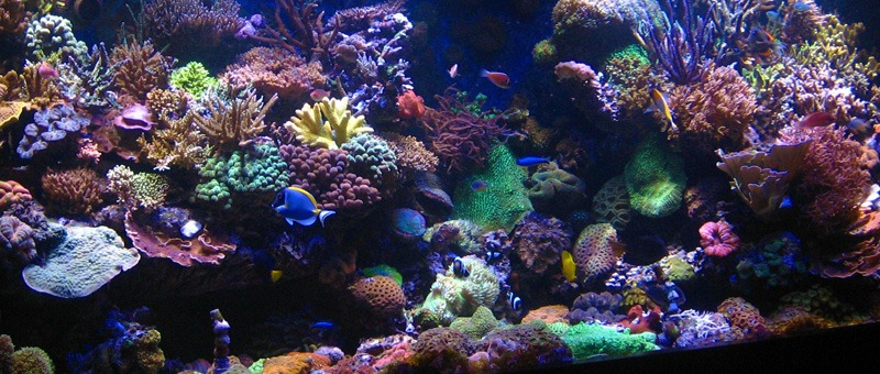 Coral-reef-tank-Israel-led-light