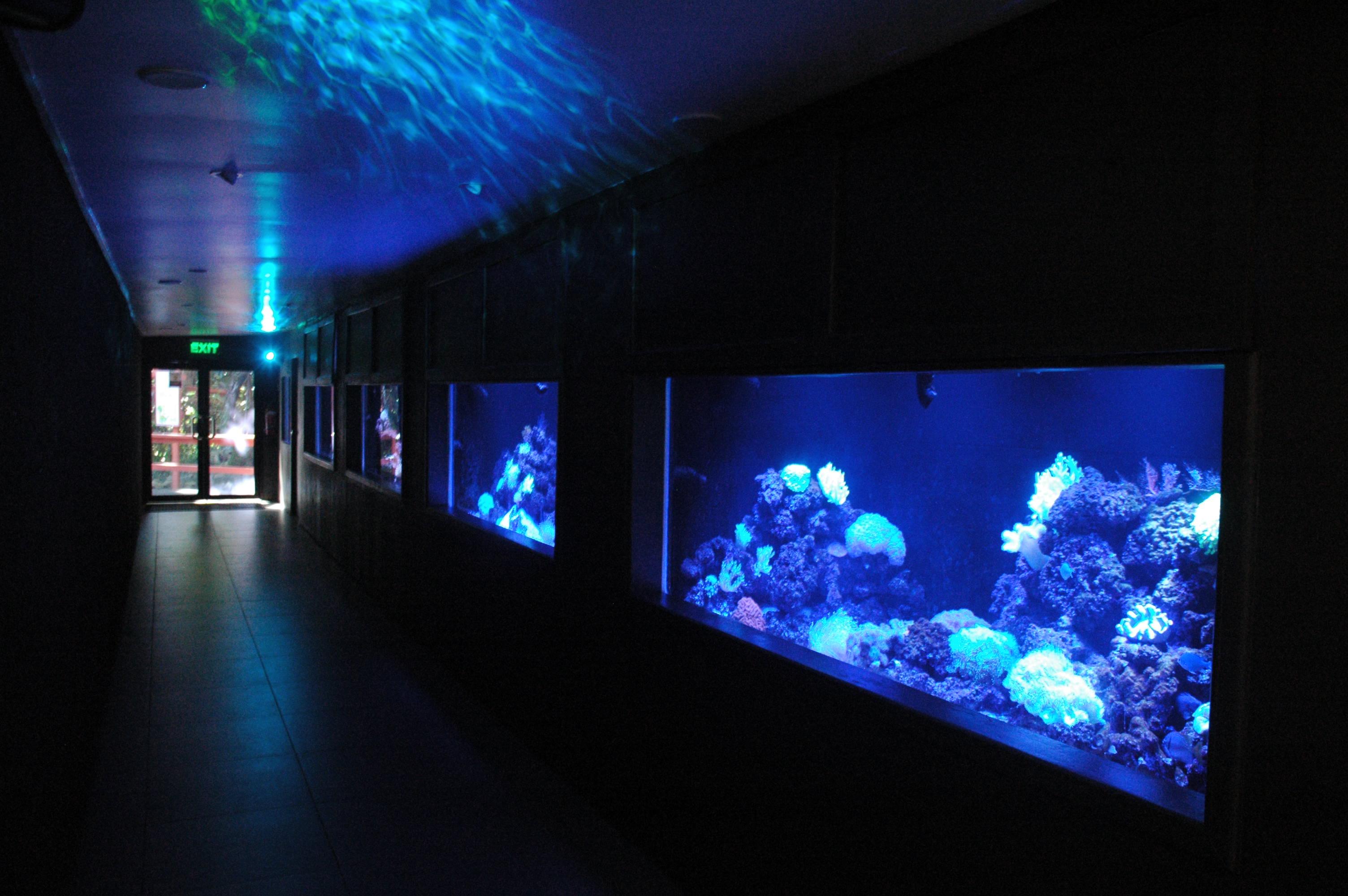 Offentlige Aquarium_fiji_reef
