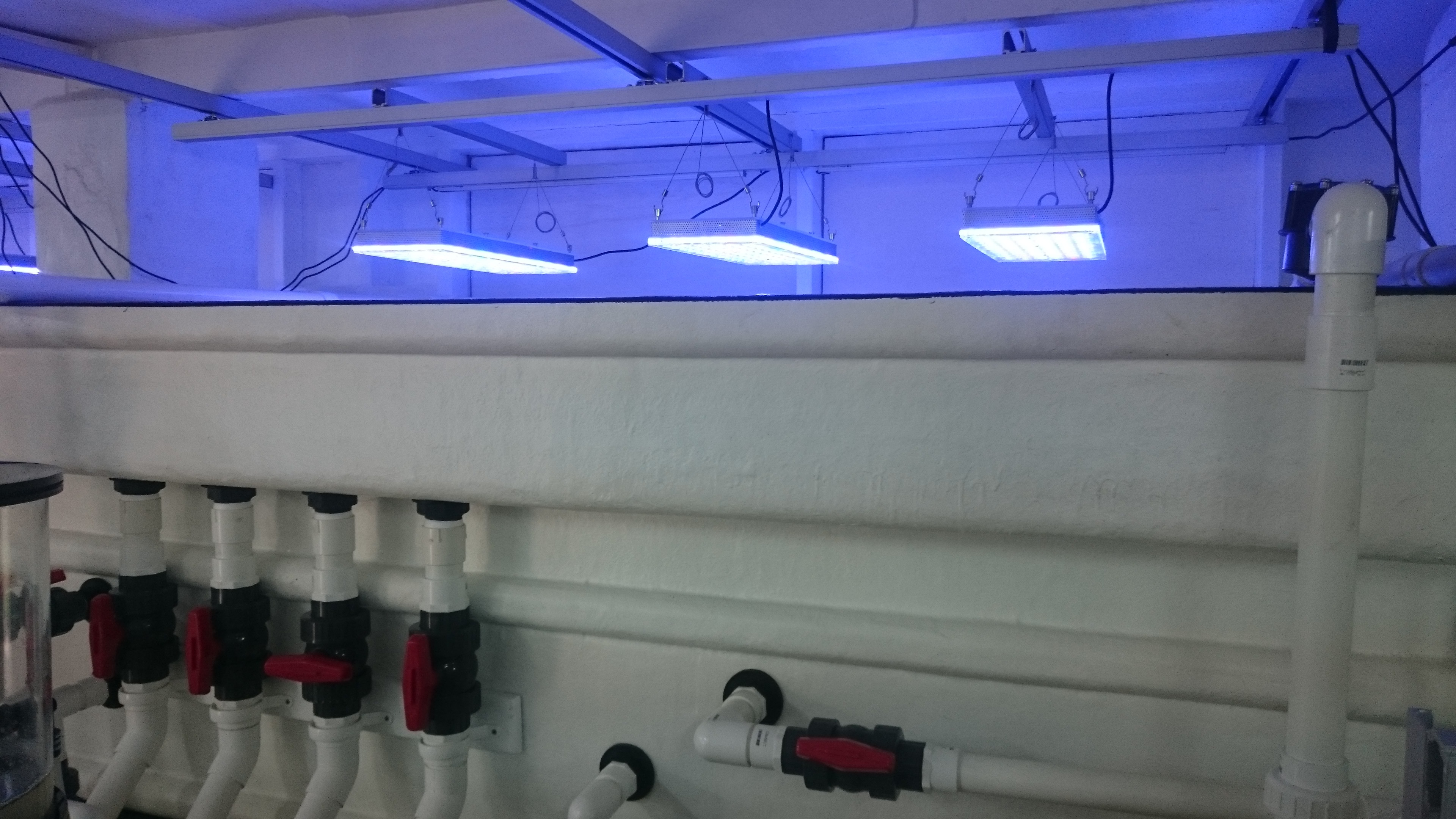 REEF LED LIGHTING publicaquarium