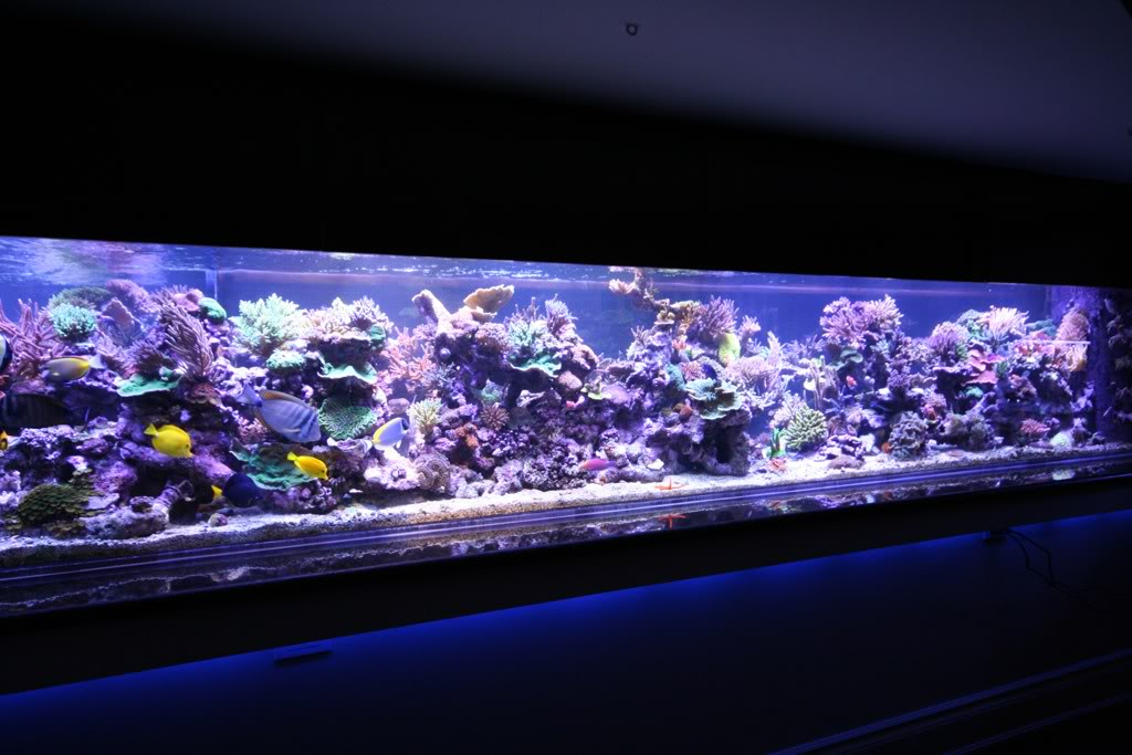 aquarium-Led-light-reef-mix