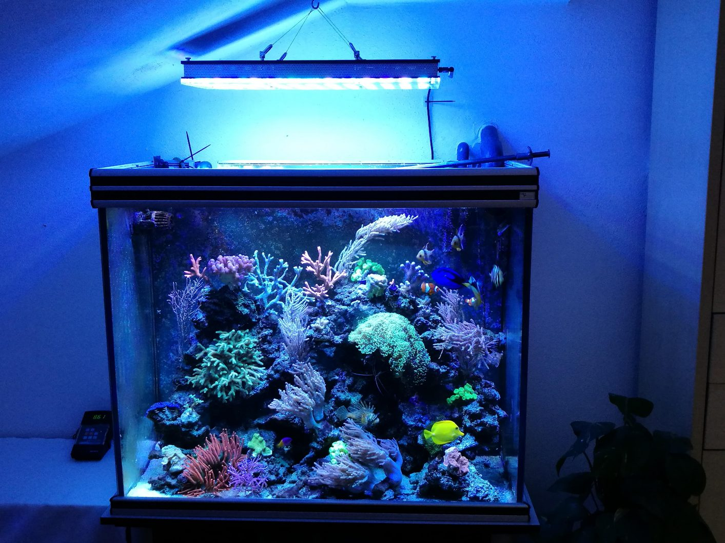 cube aquarium Atlantik v4 LED lighting