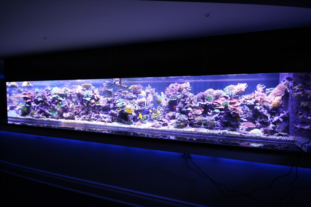 LED-light-reef-aquarium-orphek