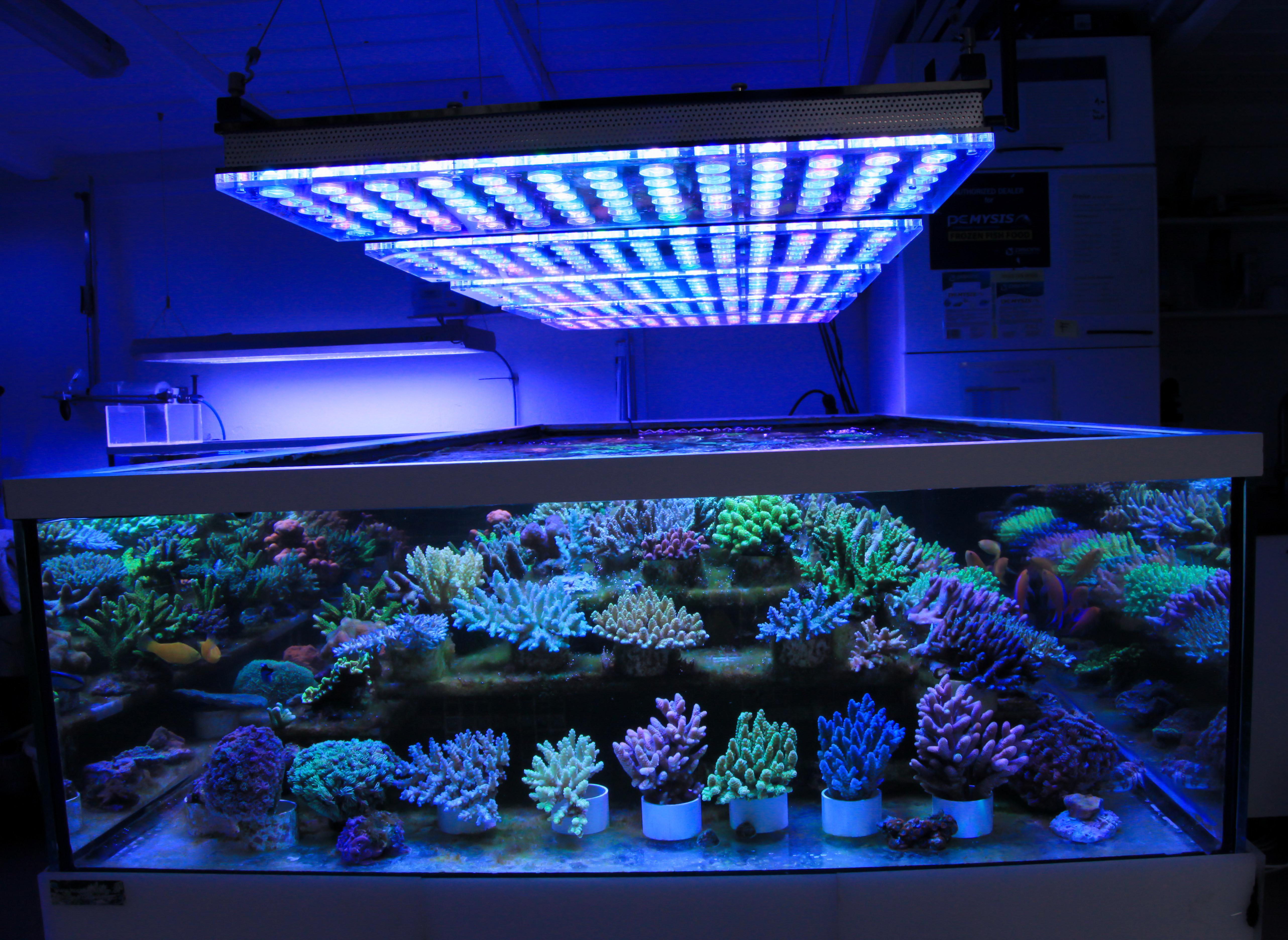Une Boutique Allemande Presente Un Bel Eclairage A Led Coral