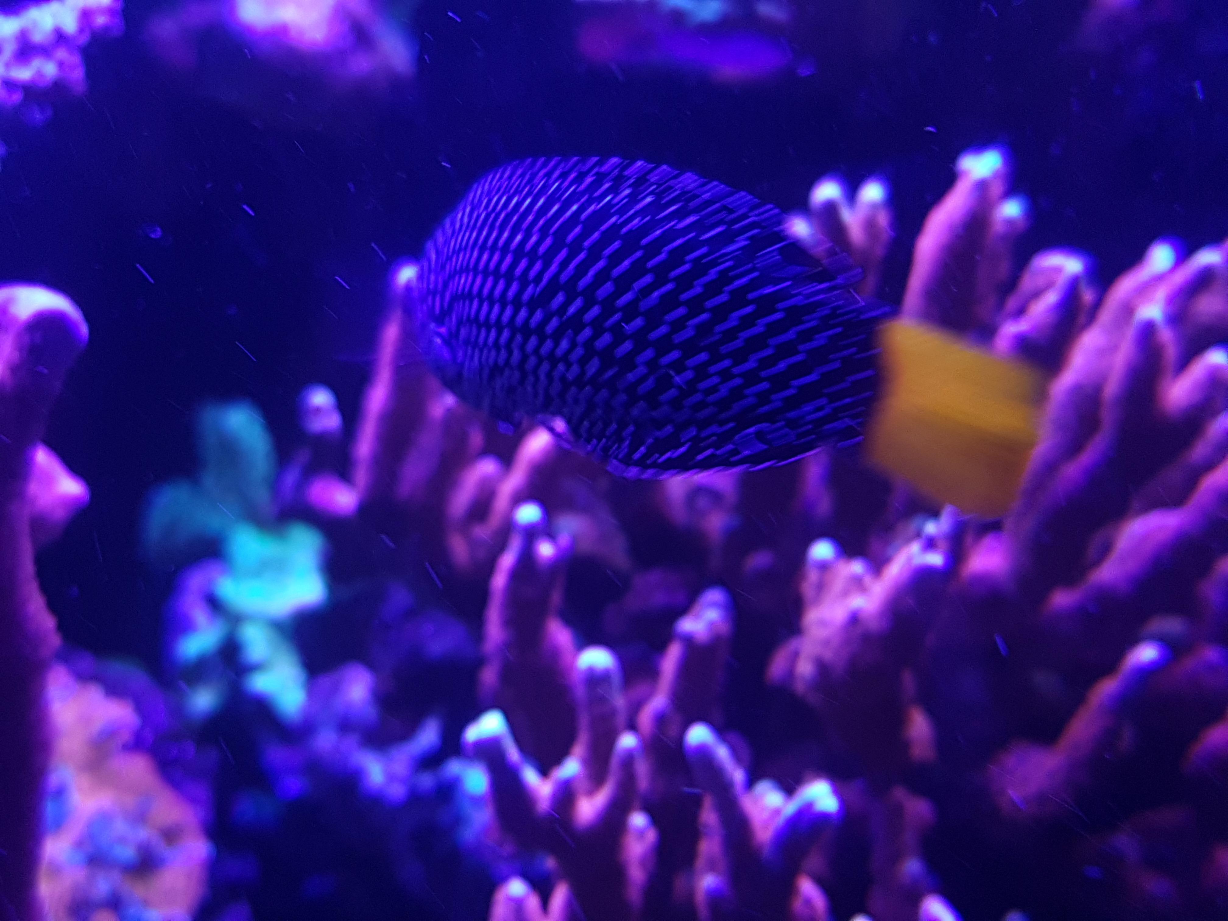 Tanne de récif de créatures marines