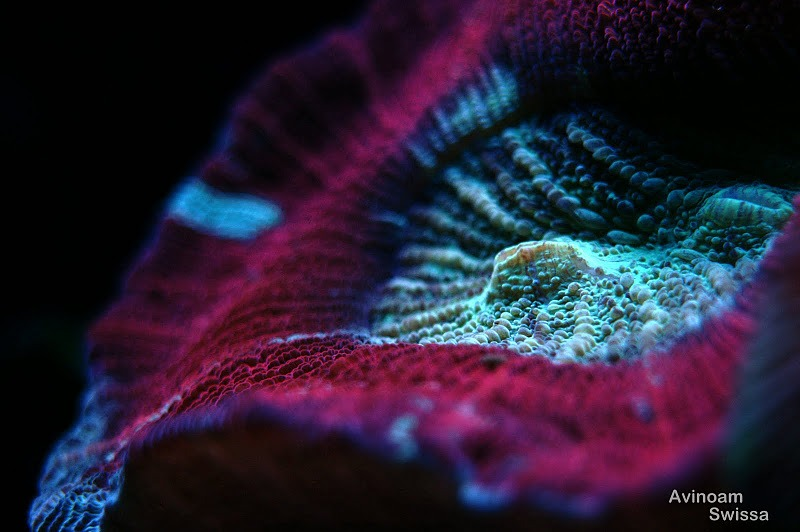 coral-aquarium-light-orphek-22