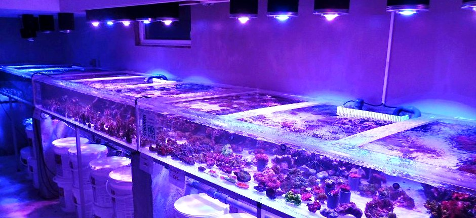 Coral farm-frag-reef-led-