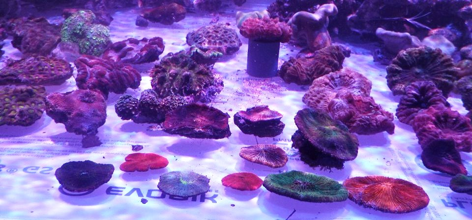 coral-farm-LED-light