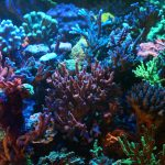 hard coral color growth LED