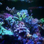 LED-Aquarium-Reef-sps אור
