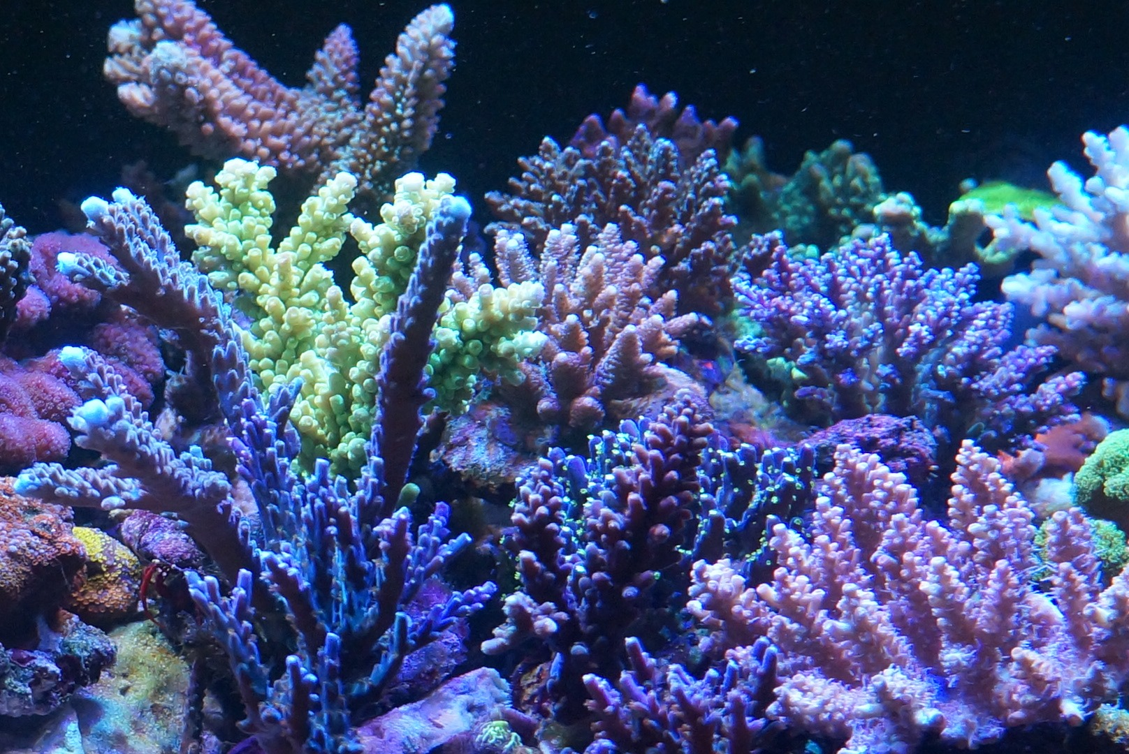 hard coral color growth