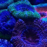 karang neon biru