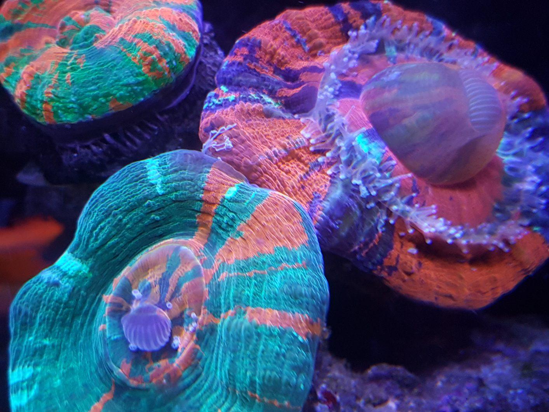 Corales cerca de luz LED