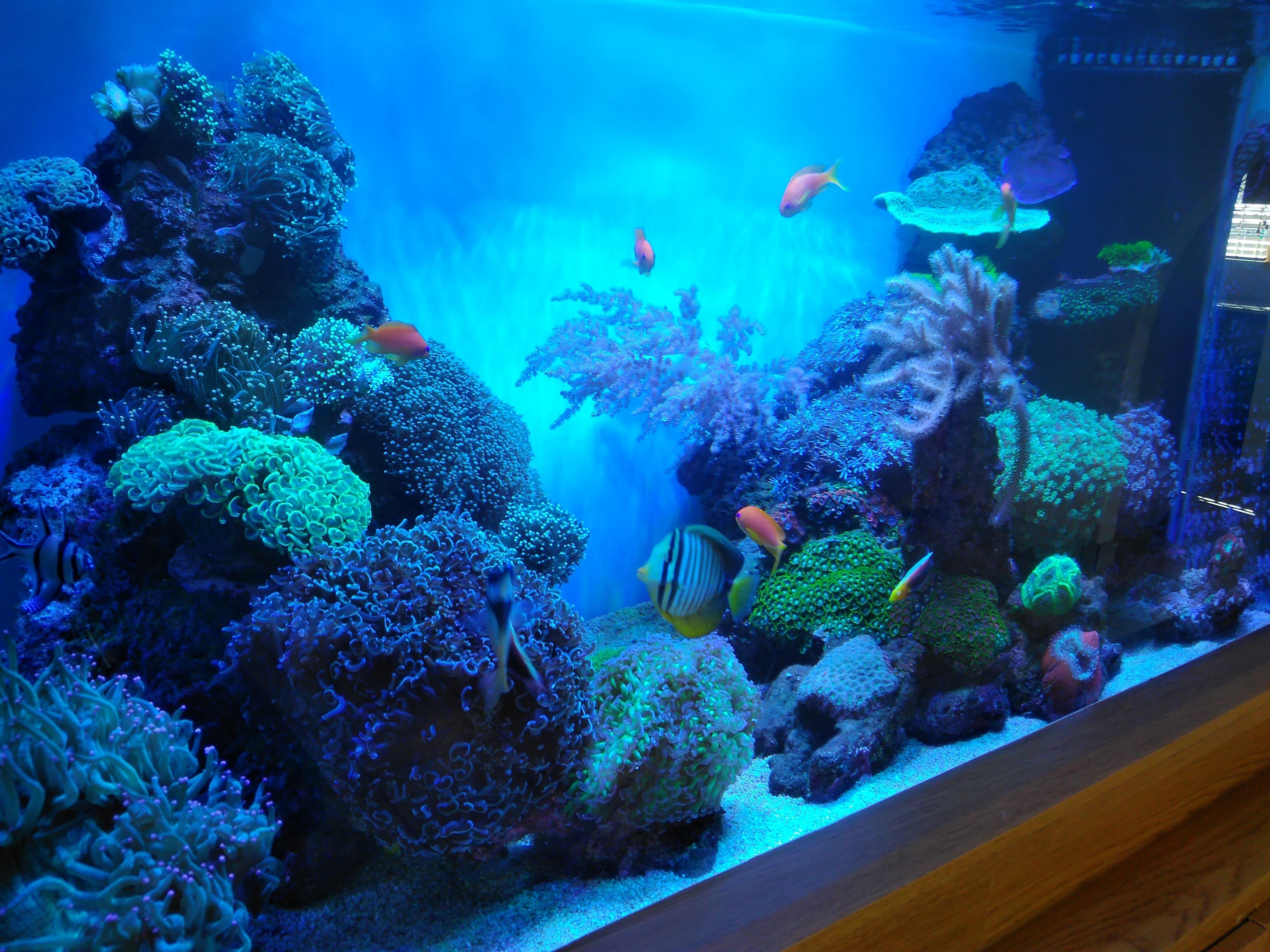 ... reef aquarium LED light. Orphek ... & South African reef tank under Atlantik V4 u2022Orphek azcodes.com