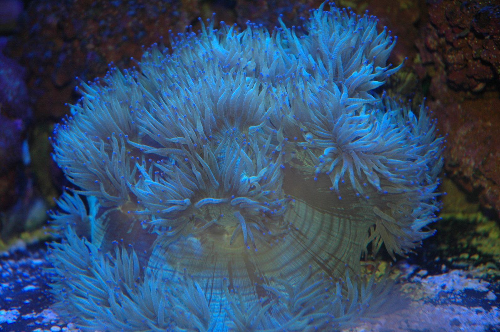 Fiji-rafy koralowej