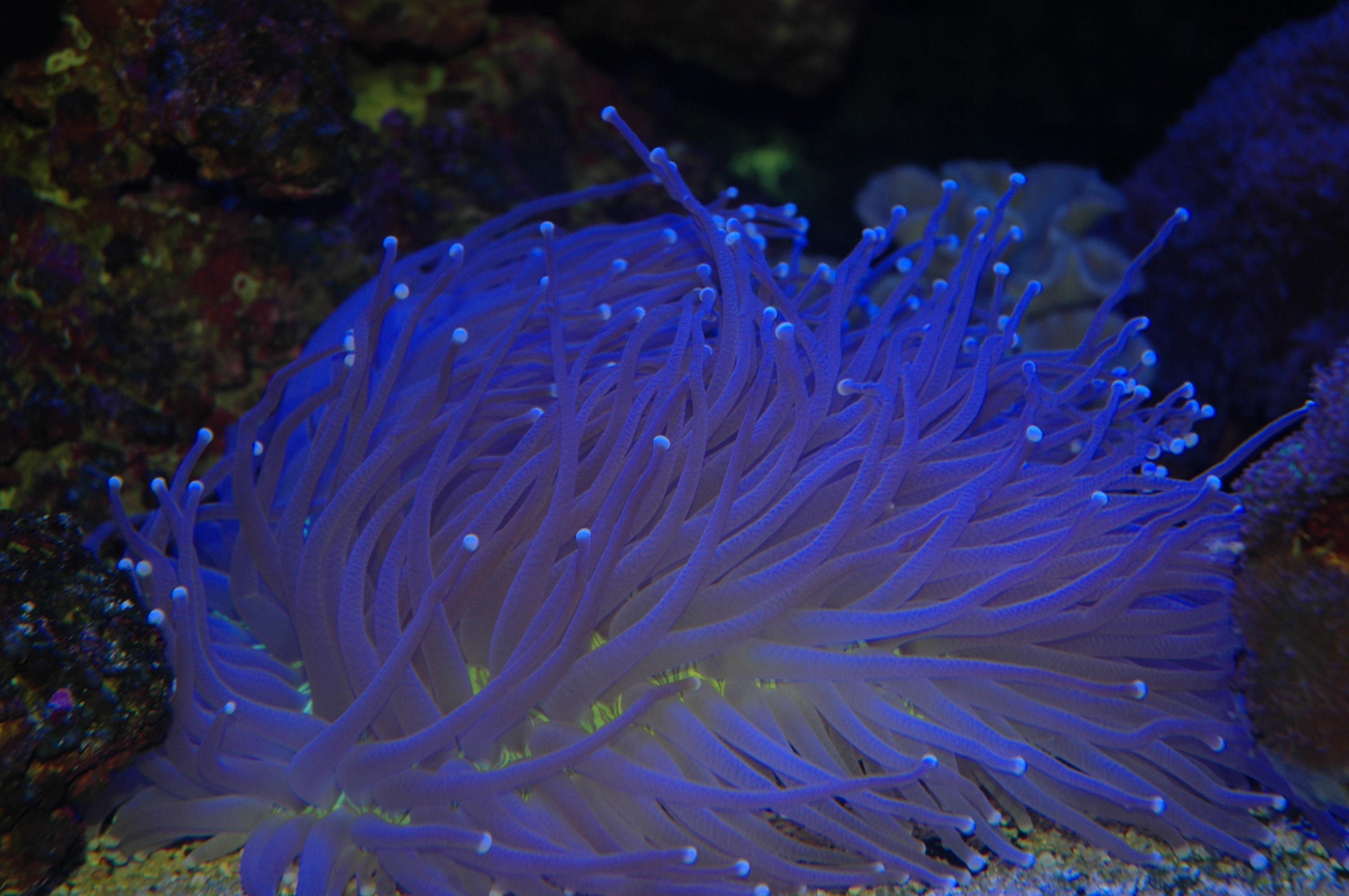 KWAP-resif mercan