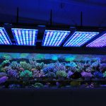 LED-Aquarium-Riff- Licht-Orphek-Atlantik-v4