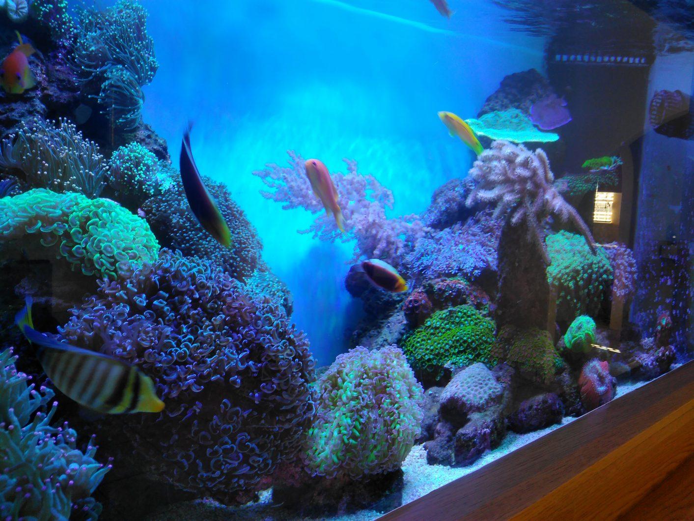 Réservoir de récif sud-africain sous Atlantik V4
