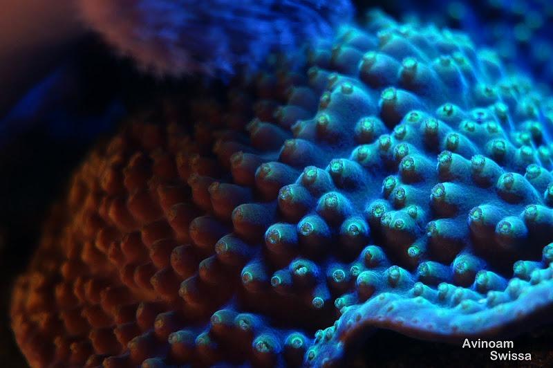 orphek-reef-aquarium-lichter-21