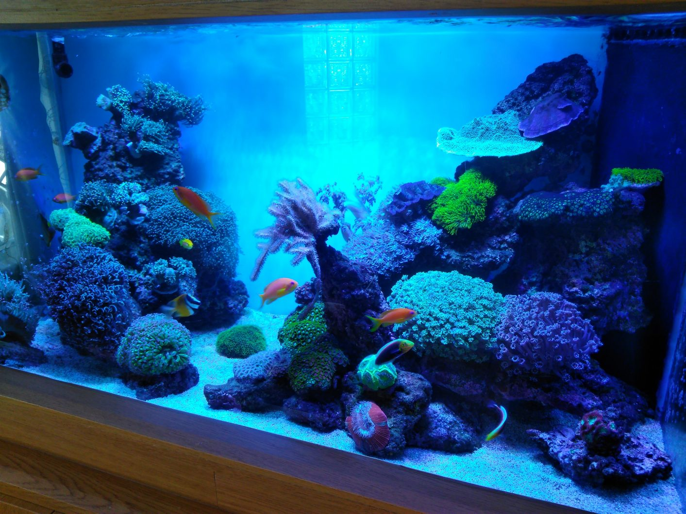 Reef aquarium led lights