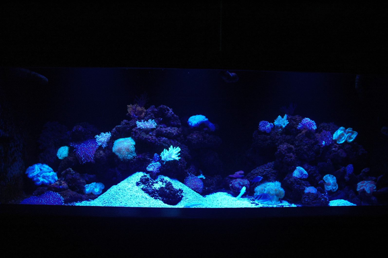 Reef coral display