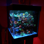 Reef Cube Tank Atlantik LED light V4