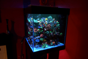 Beautiful cube reef tank from Scotland Atlantik V4 Upgraded