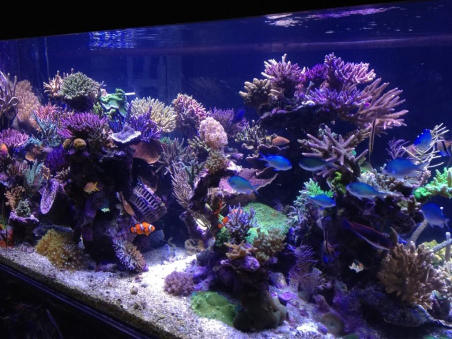 Salzwasser-Aquarium-1300G