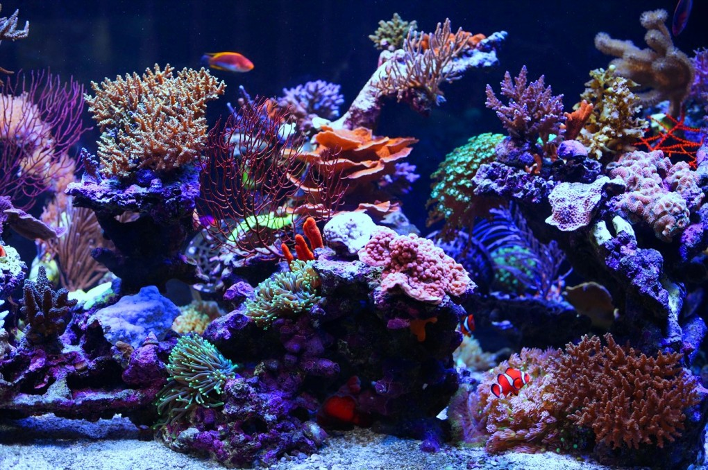 saltwater-tank-mixed-reef-1350-gal