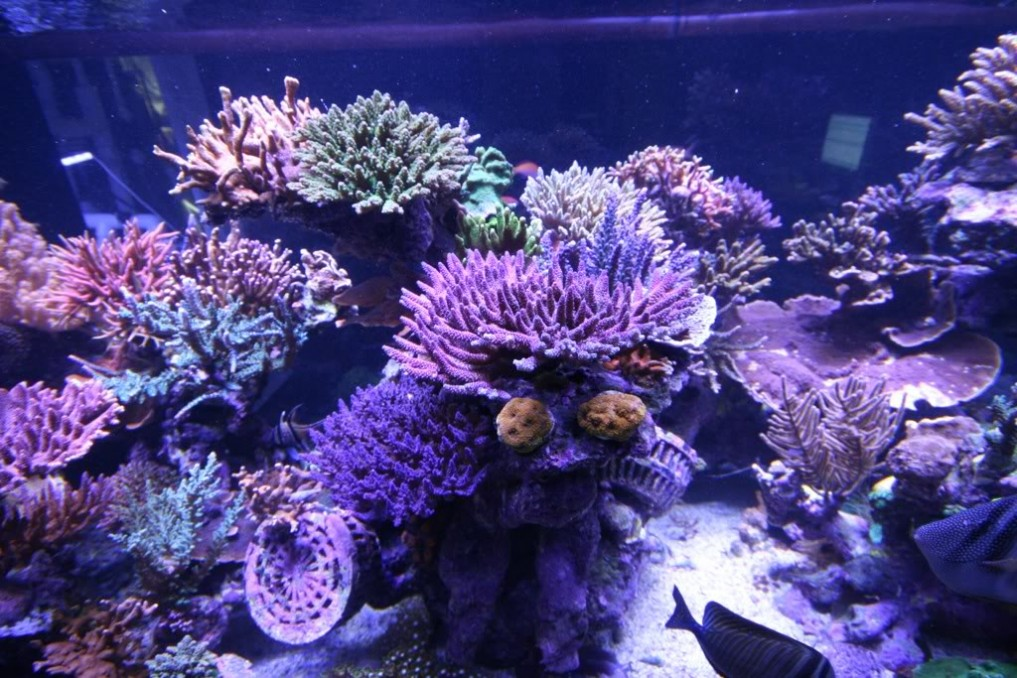 saltwter-reef-led-lighting