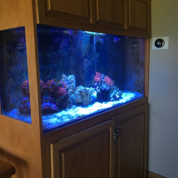 Reef Tank in cabinet with Atlantik V4 from Indiana