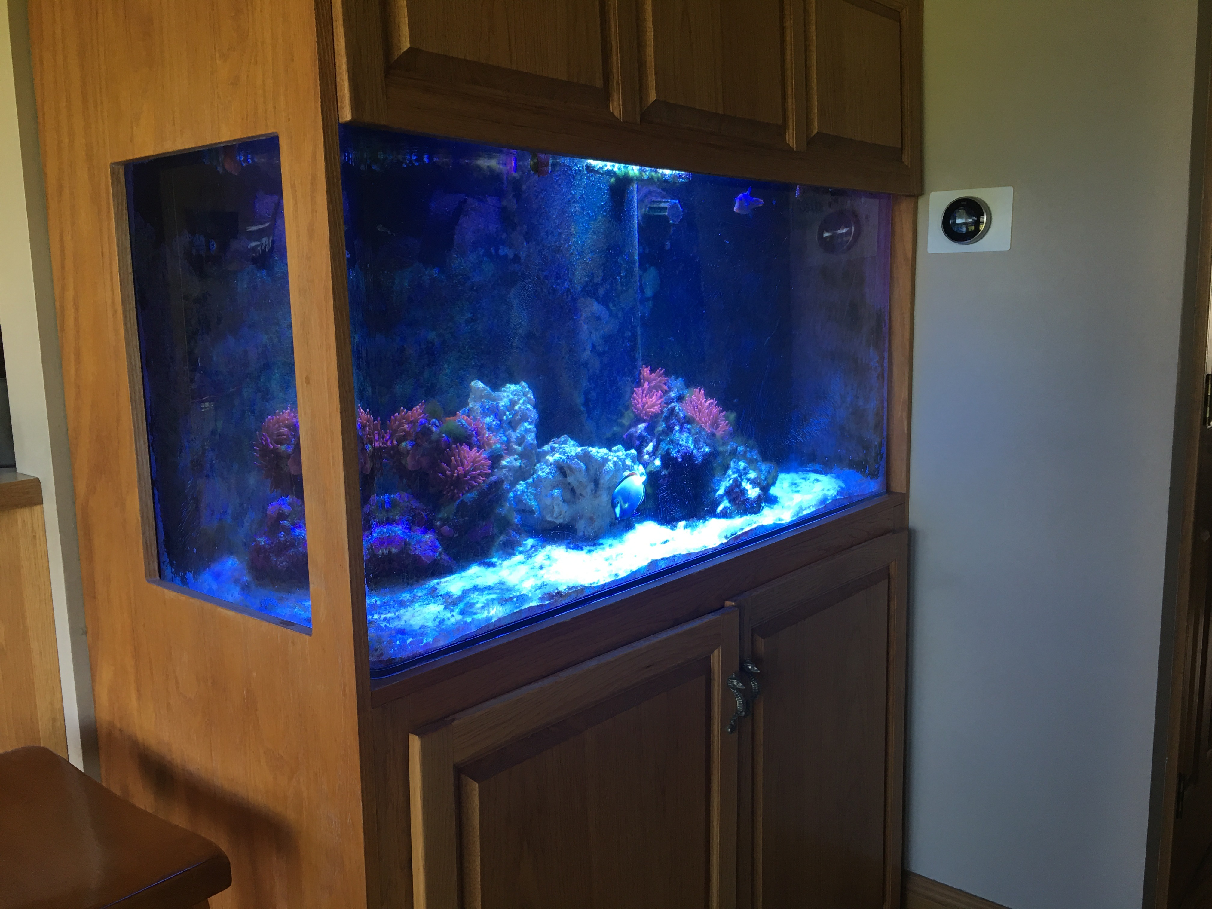 Reef Tank In Kast Met Atlantik V4 Uit Indiana Reef