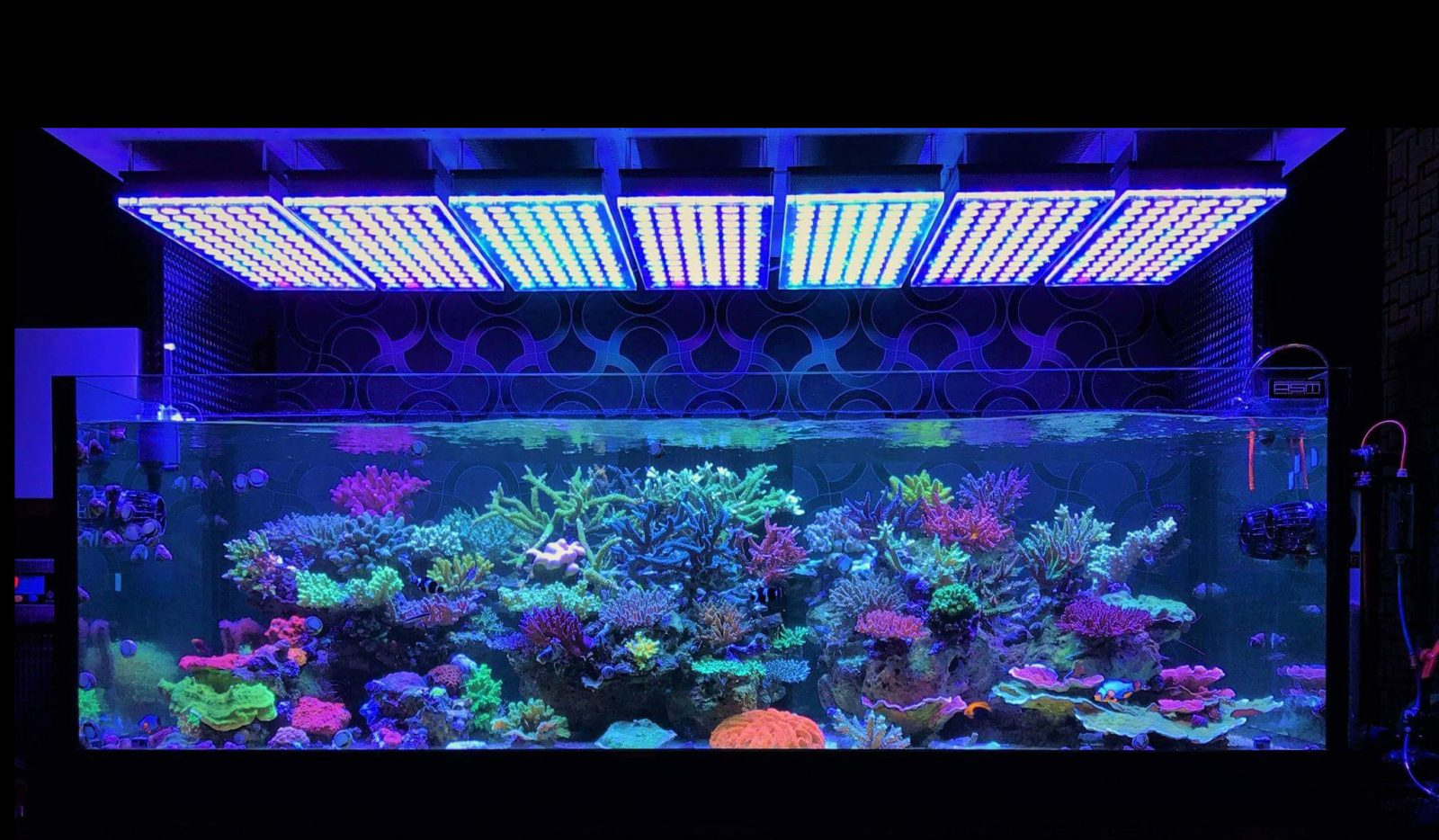 amazing japanese reef tank under atlantik v4 led lighting. Black Bedroom Furniture Sets. Home Design Ideas