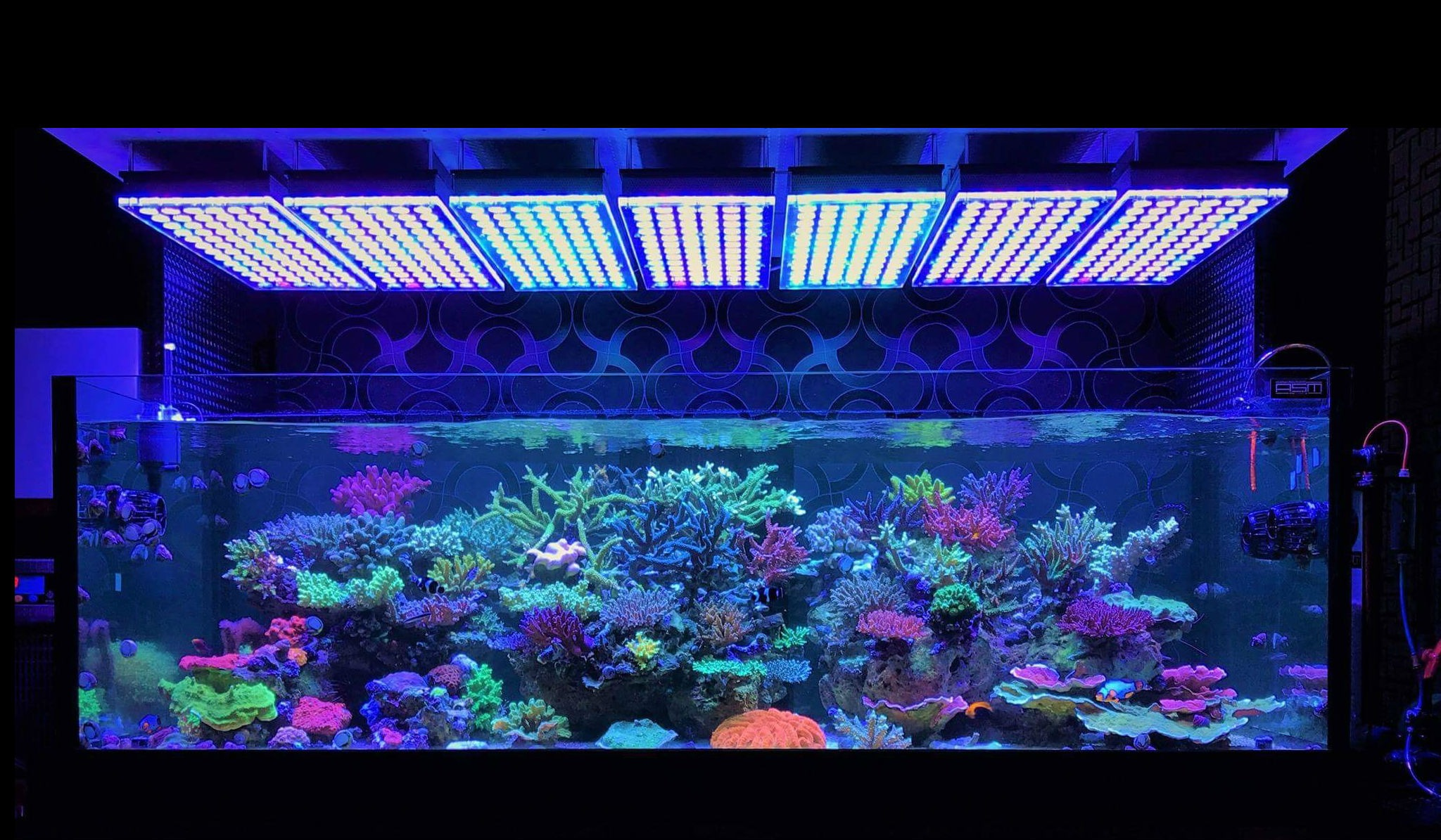 Amazing Japanese Reef Tank Under Atlantik V4 Led Lighting Orphek
