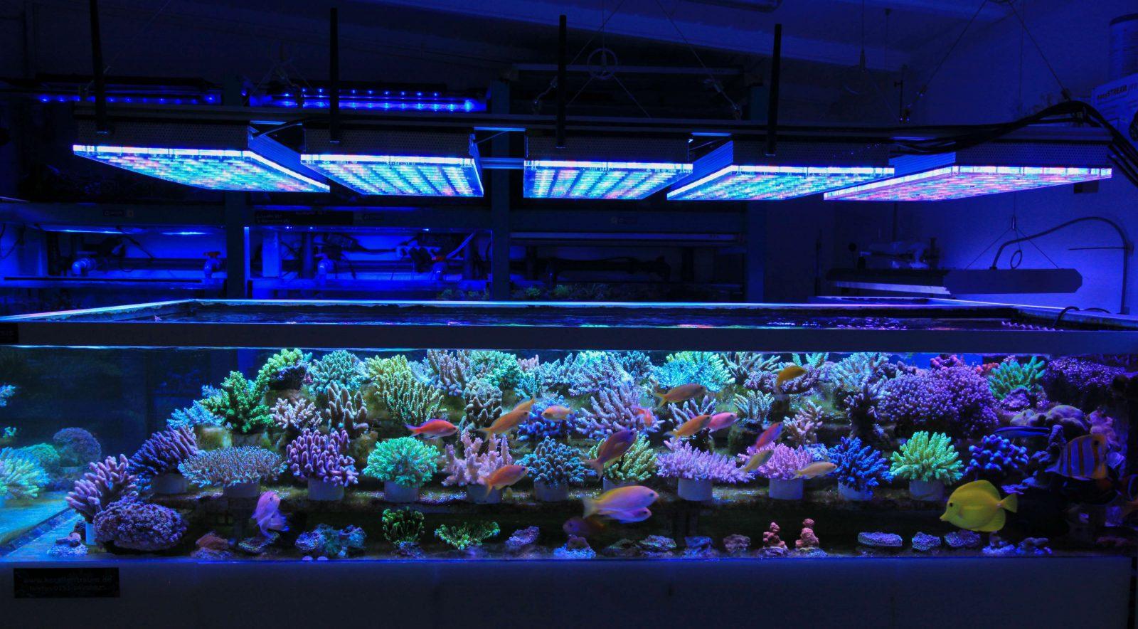Acuario de iluminación LED arrecife Orphek Atlantik v4