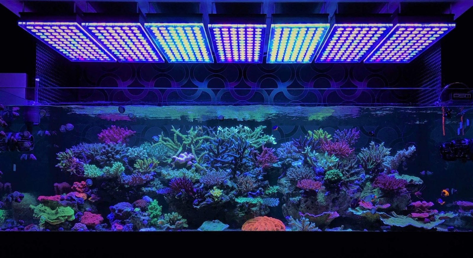 Amazing Japanese Reef Tank Under Atlantik V4 Led Lighting