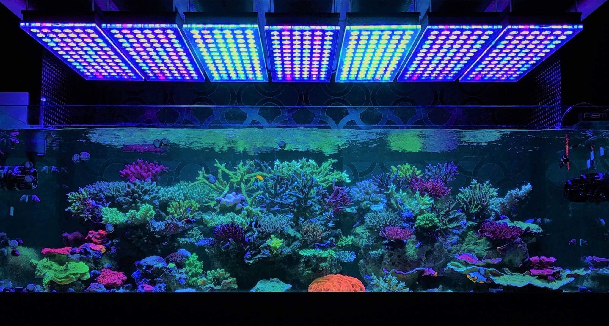amazing japanese reef tank unter atlantik v4 led beleuchtung aquarium led beleuchtung orphek. Black Bedroom Furniture Sets. Home Design Ideas