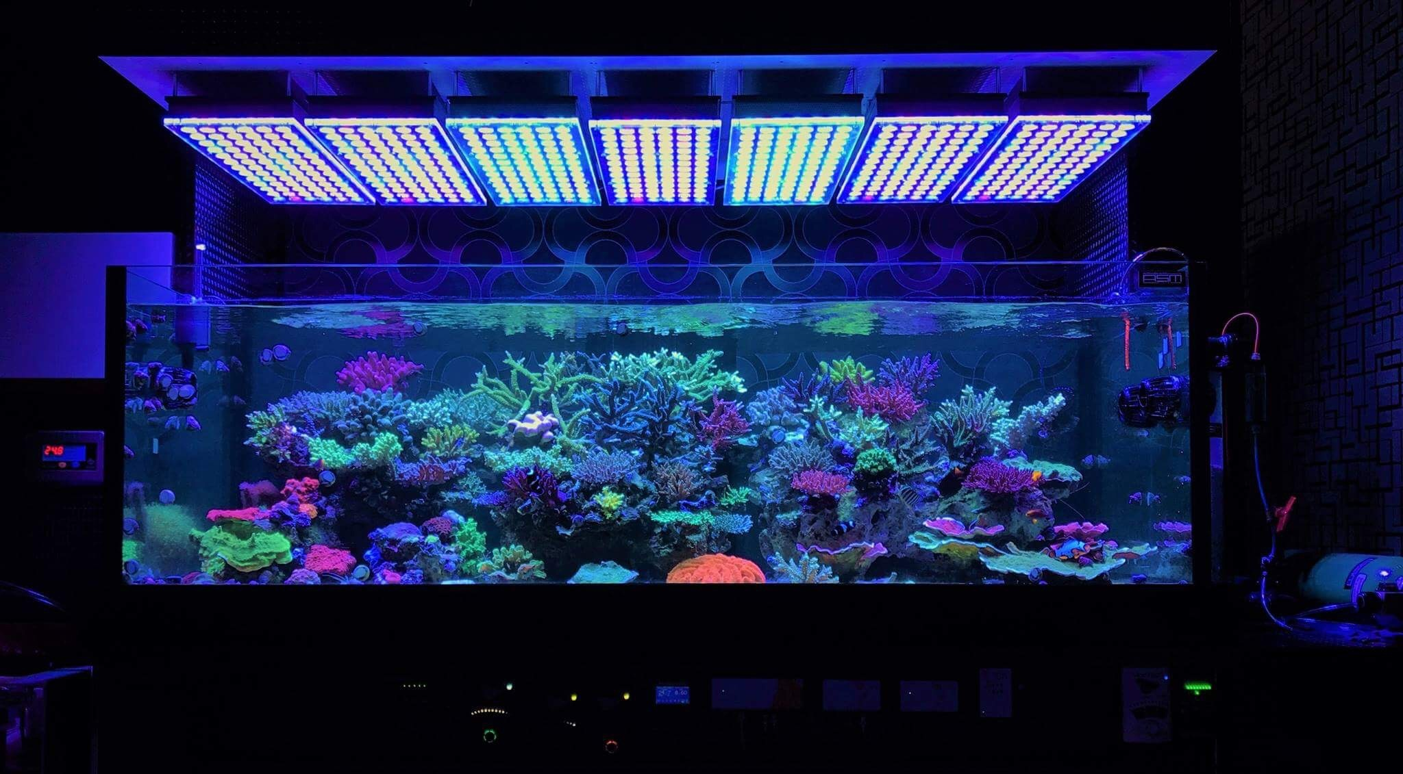 Amazing Japanese Reef Tank Under Atlantik V4 Led Lighting Aquarium